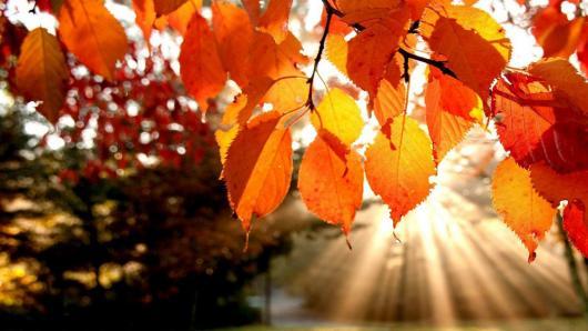 Kalendorinės šeimos ir bendruomenės šventės rudenį