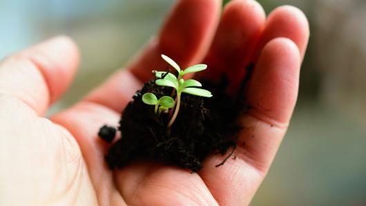 Augalų daigeliams virusai nebaisūs!