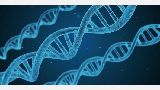 Skelbiamos konkurso, skirto DNR dienai minėti Lietuvoje, 2021 m. temos