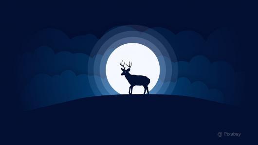 Kviečiame pažvelgti į naktinį žvėrių gyvenimą