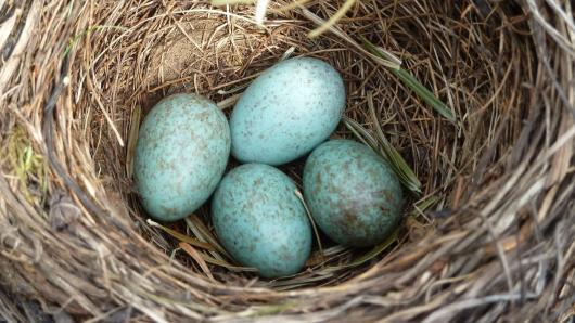Velykų belaukiant – pamoka apie kiaušinius gamtoje