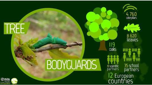 """Kviečiame dalyvauti naujame gamtotyros projekte """"Medžių asmens sargybiniai"""""""
