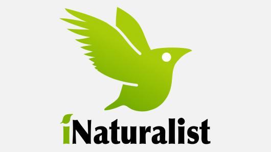 Išmaniųjų technologijų pritaikymas gamtos mokslų pamokose. iNaturalist mobilioji programėlė ir mokytojui, ir mokiniui