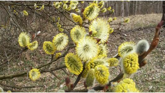 Kalendorinės lietuvių šventės: pavasario šventės