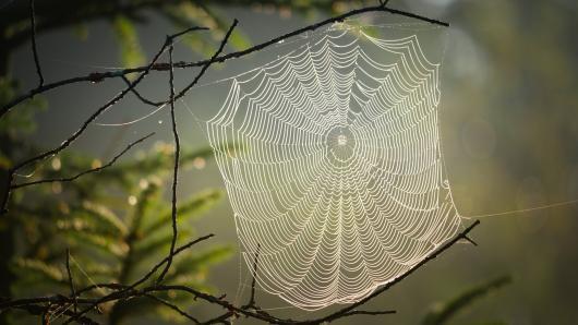 """Kviečiame į nuotolinių gamtos pamokų ciklą """"Pažinimo voratinklis"""""""